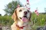 이름 하여<br>꽃 개
